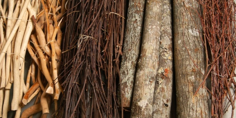 Twigs & Logs (assorted species available)