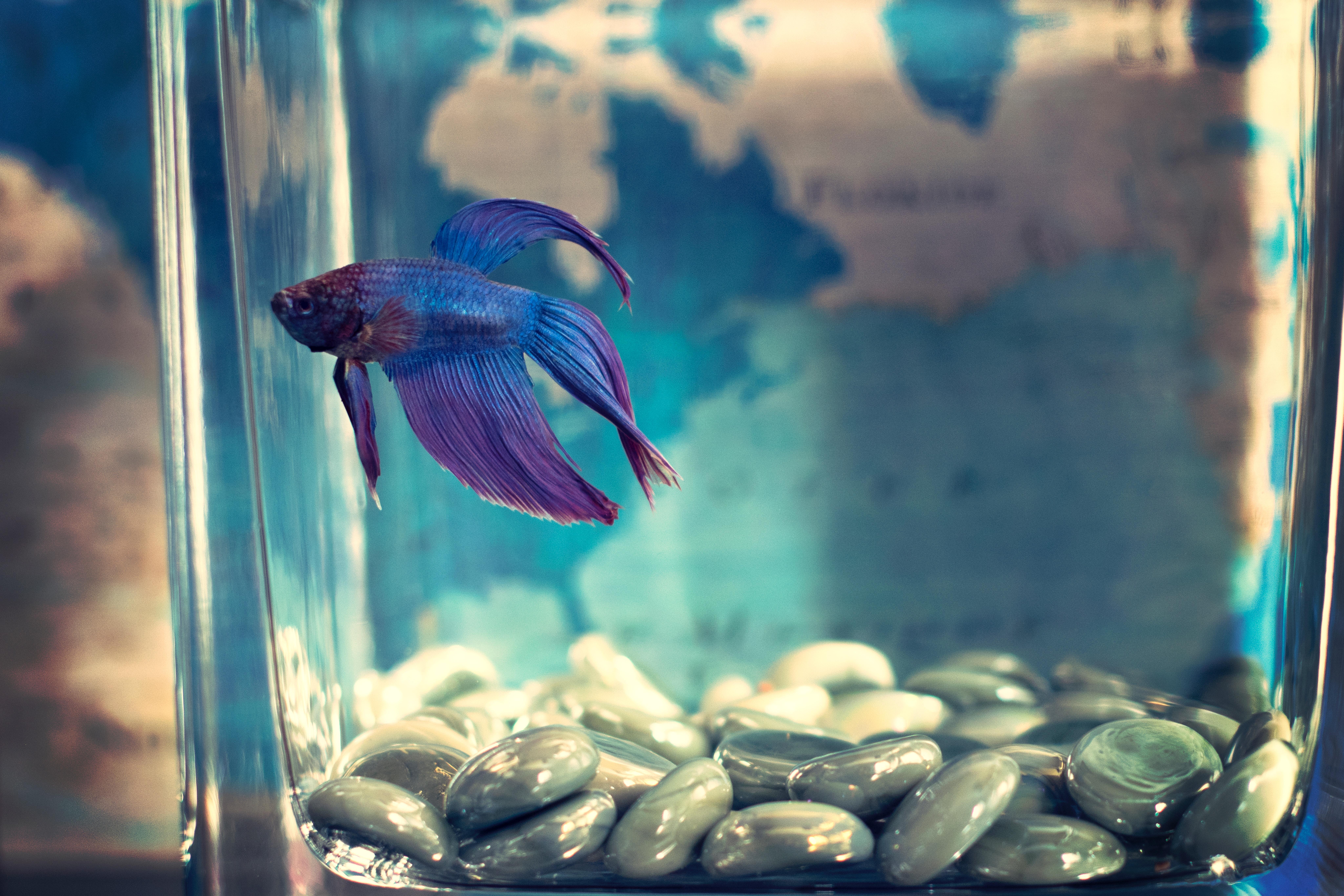 CaraGreen Biophilic Fish Tank