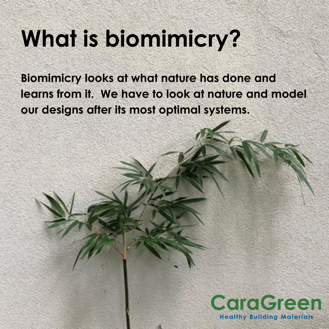 what-is-biomimicry-definition-building-architecture-design-caragreen