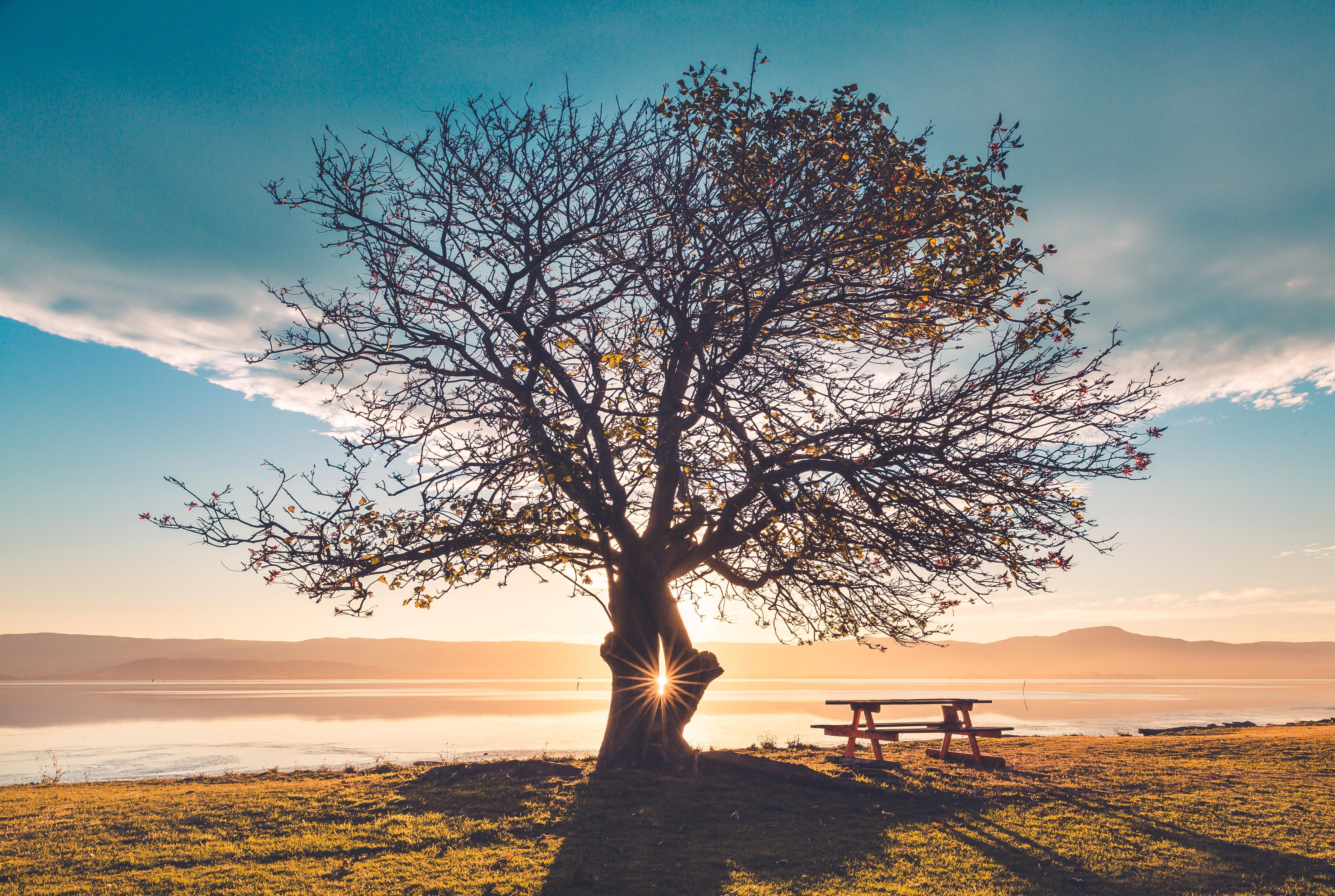 beautiful_nature_tree_sustainable