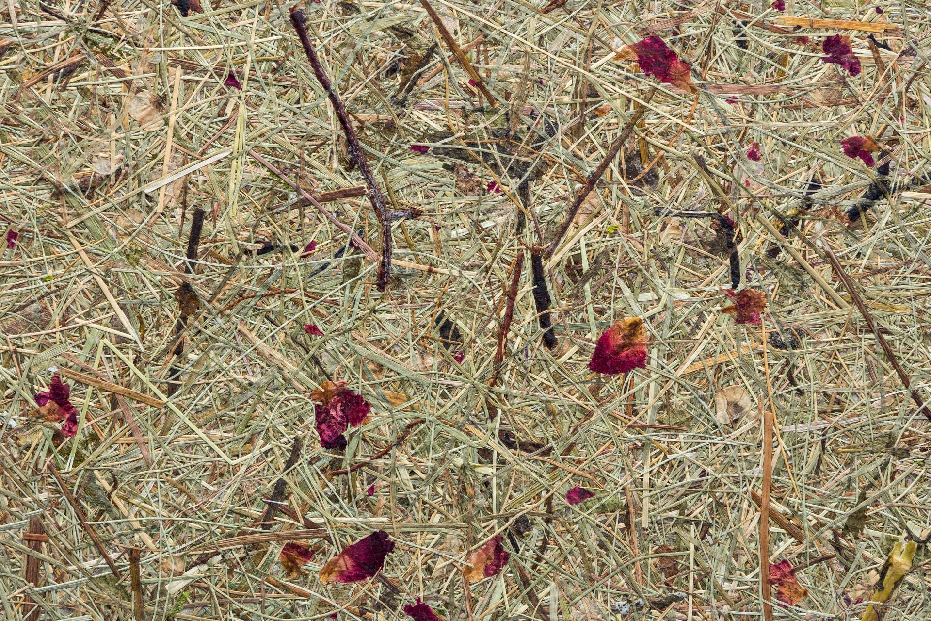 Organoid Natural Surfaces Caragreen