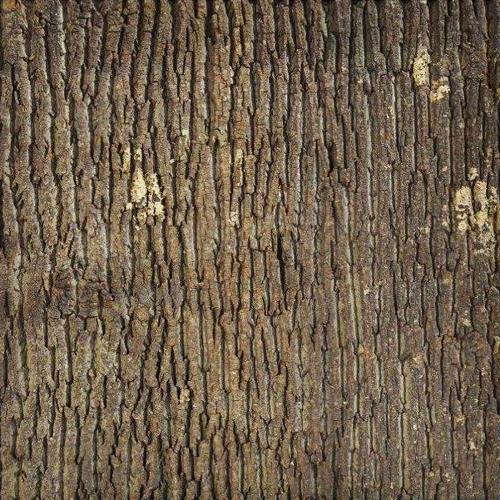 Bark House Caragreen